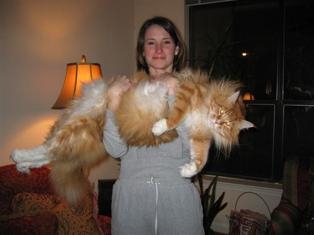 Huge Puffy Cat