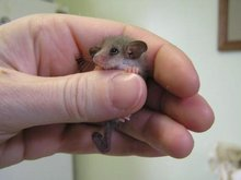 Tiny Mouse