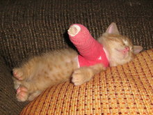 Kitty Cast