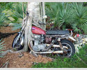 Motorcycle eaten by tree